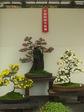 姫路城菊2jpg