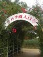 RSKバラ園.jpg